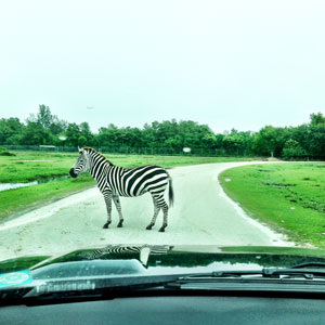 lyon-country-safari